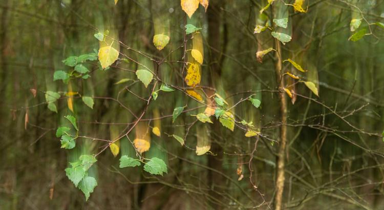 Ontfocussen en herfstkleuren in het bos