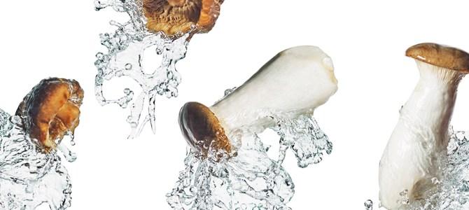 Just Mushroom