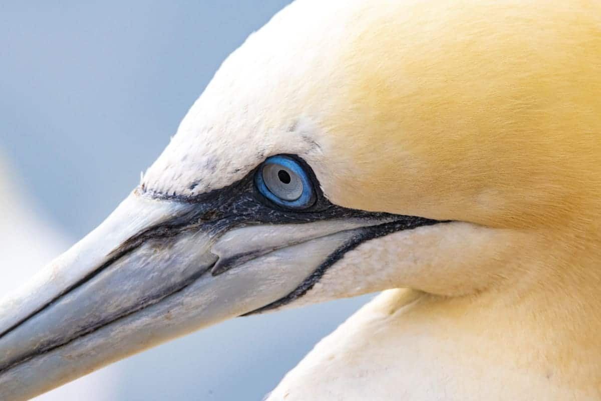 Fotoreis Helgoland Jan van Gent in close-up
