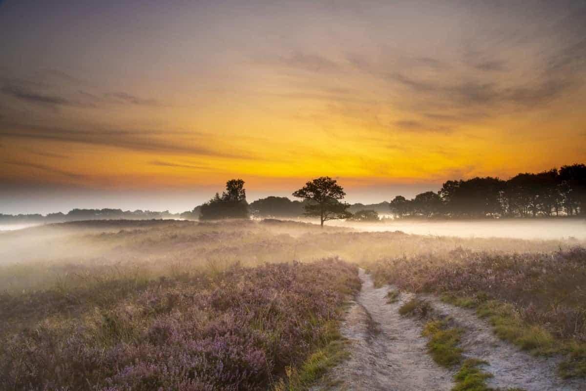 Fotoweekend Drenthe Gasterse Duinen mistflarden | Fotografie-reizen - Fotoreizen