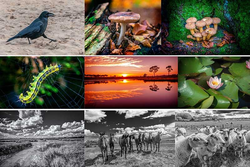 landschapsfotografie en natuurfotografie