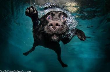 """Underwater Dogs"""