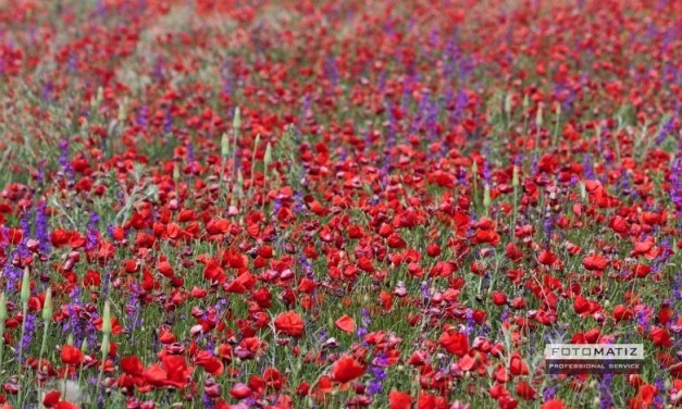 Field full of flowers