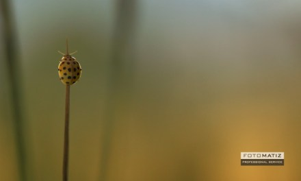 Ladybug on a blade of grass