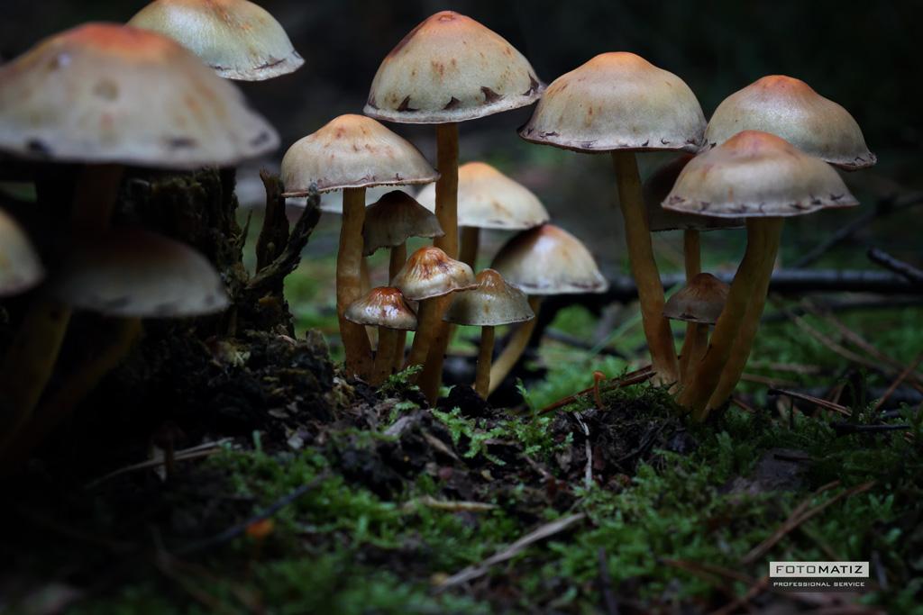 macro forest mushroom