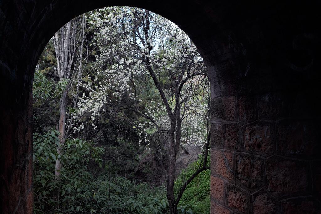 Tree shot from under the bridge