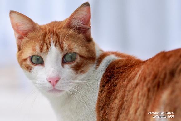 Mimi, mi gato callejero, fotografiado para un taller de fotografía