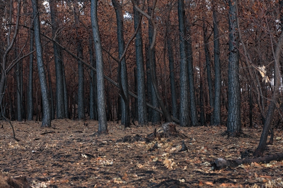 Un bosque quemado