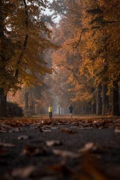 Parco di Monza (MB) - Foto di Riccardo Casarico (c)
