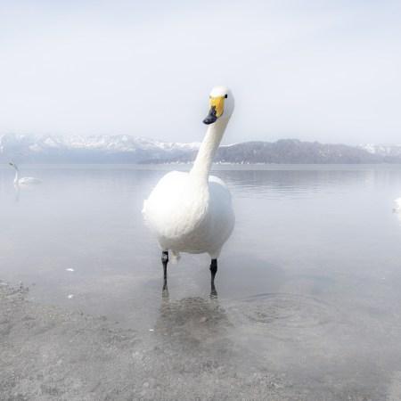 Nello Taietti, Hokkaido 3, 52x35 cm.