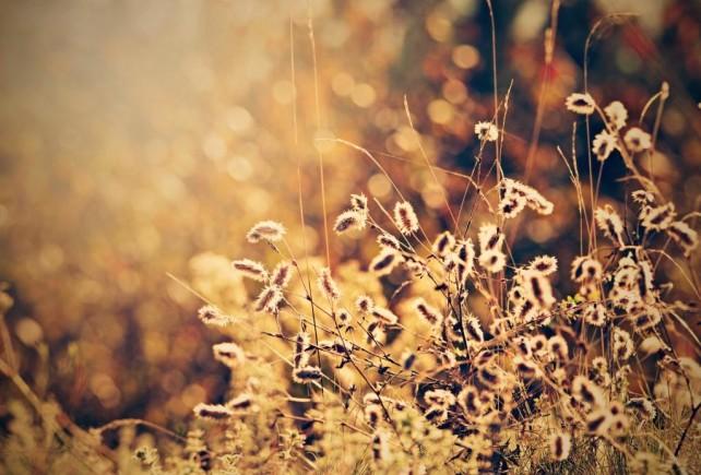Ria Zajacová - V jesennom slniečku
