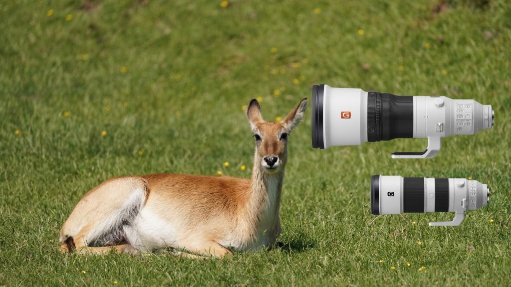 Die neuen Sony-Super-Teles eignen sich u.a. sehr gut für Tierfotografie.