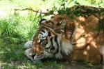 zoo-lesna-380
