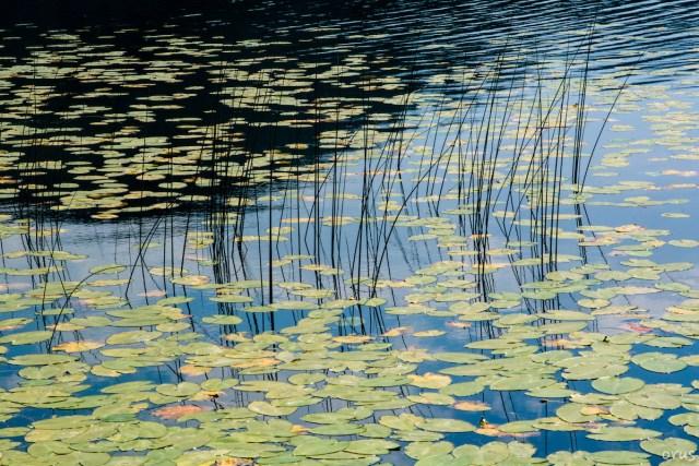 bahar fotoğrafları göl