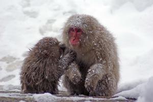 Fotoreise Japan im Winter