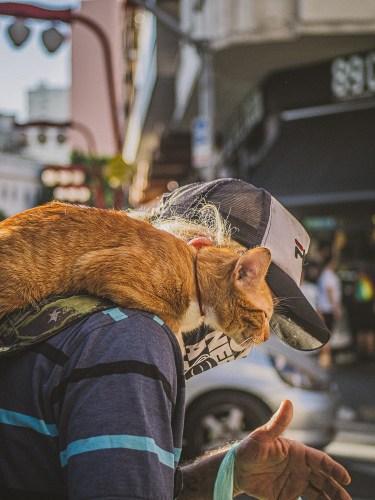 Gato, melhor amigo do homem - Vida Que Segue - Magnesio