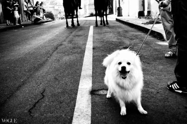 The little white dog - ph andrea scirè