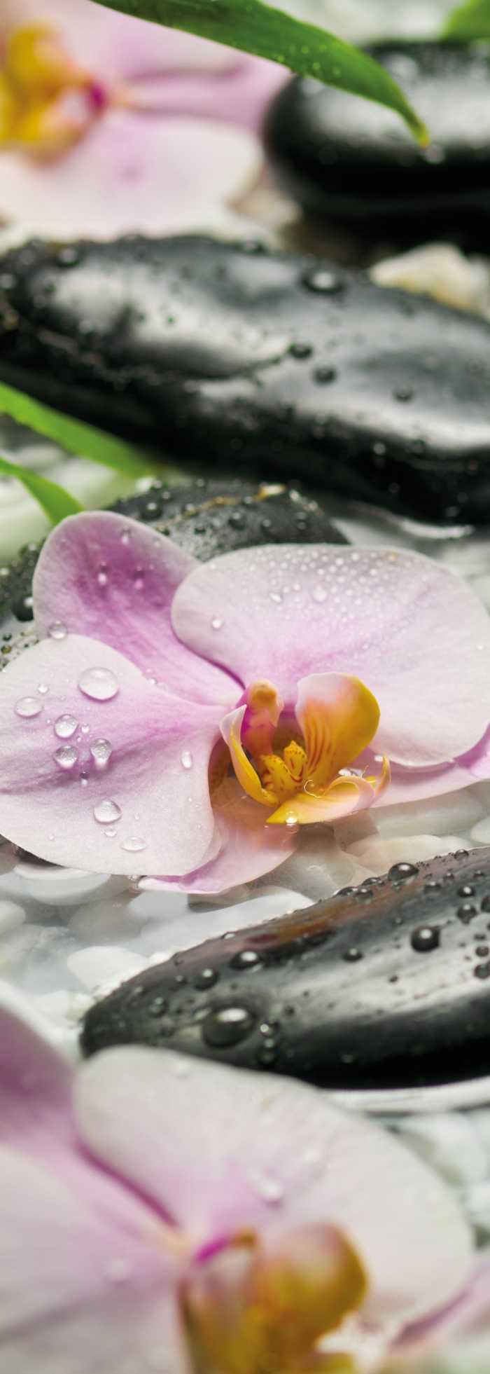 Fototapete Blumen Mit Oder Ohne 3D Effekt Online Kaufen