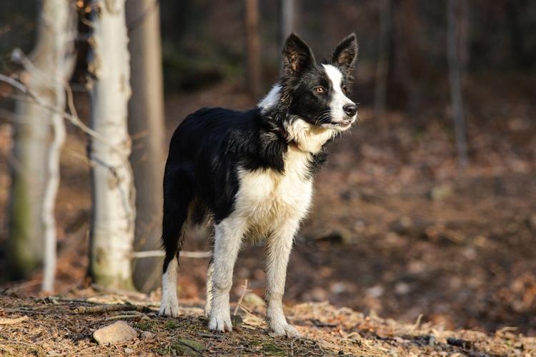 Fotografia psa w lesie