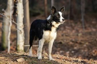 Szczeniak psa w lesie