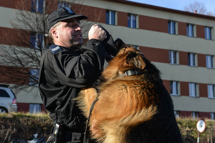 Zabawa psa z policjantem