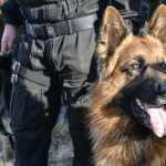 Psy napolicyjnej służbie