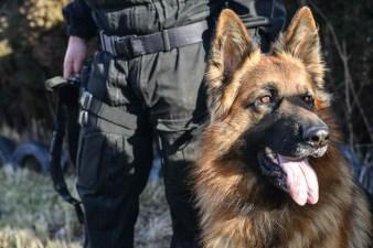 Psy policyjne- fotoreportaż