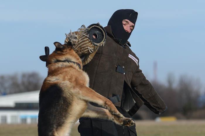 Trening psa obronnego