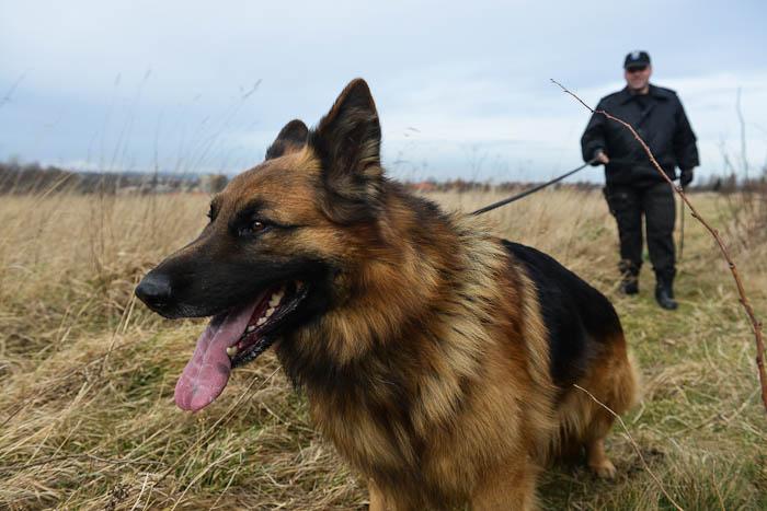 Pies tropiąco-obronny i przewodnik