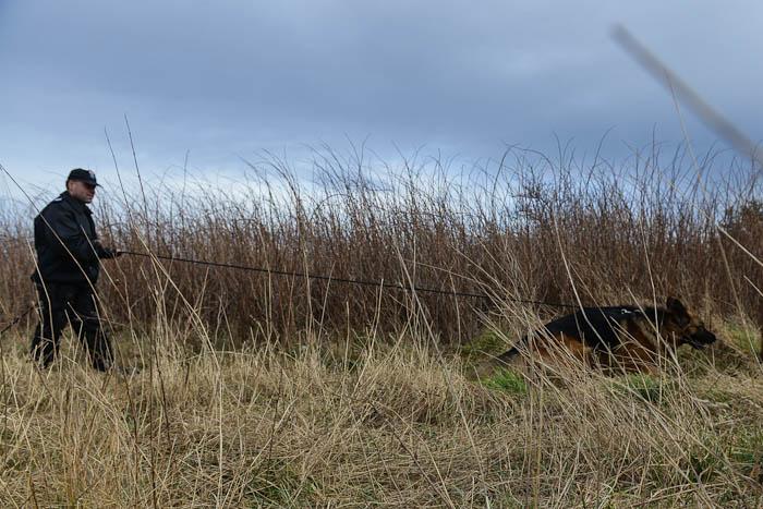 Policjant i policyjny pies tropiący w terenie