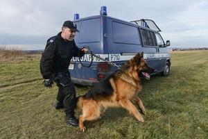 Psy policjne, fotoreportaż