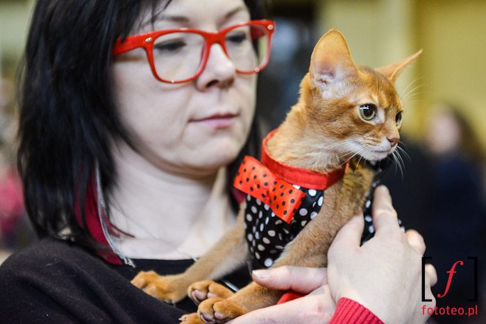 Mały kot na rękach swojej właścicielki
