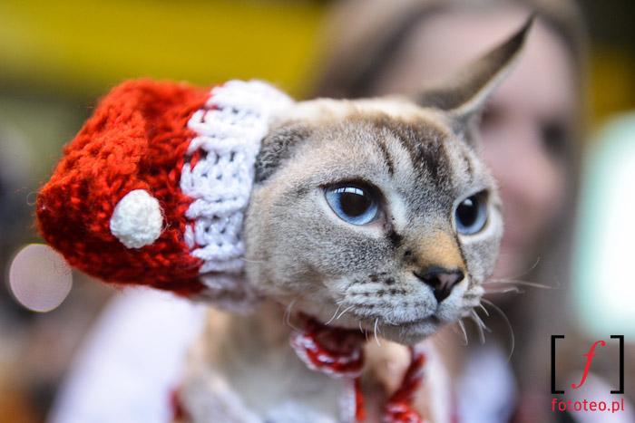 Zdjęcie kota w czapce