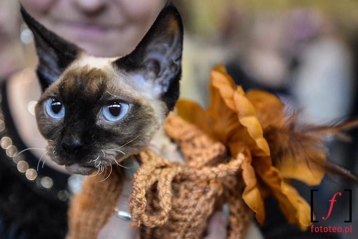 Wystawa kotów rasowych, Bielsko-Biała, Śląsk