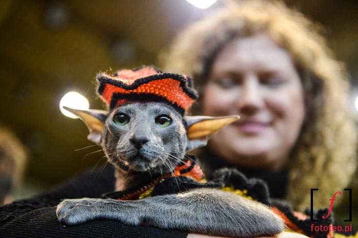 Fotografia kotów, pokaz kociej mody
