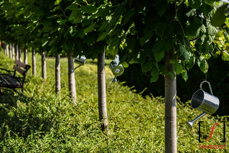Szpaler drzew