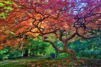 How to Shoot Portland Japanese Garden - Fototripper