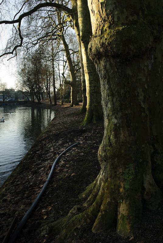 Bomen langs singel, Manenburg