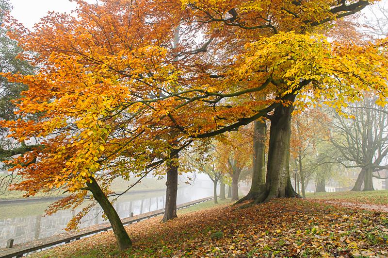 Mistige herfstdag, Sterrenburg