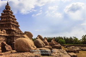Mahabalipuram, India - 8th Century Shore Temple and Granite Cows