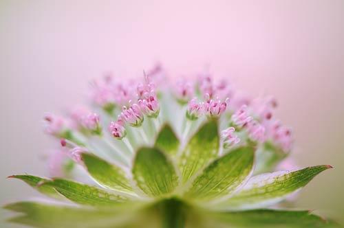 Floral art by Jacky Parker