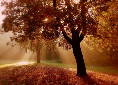 autumn dreams art print home decor