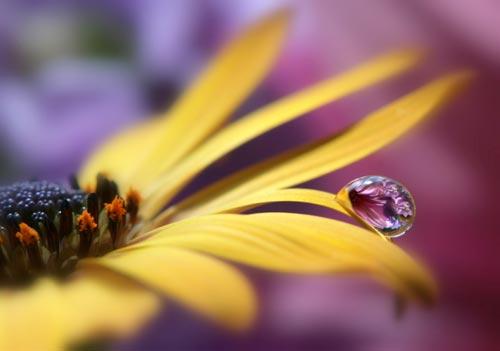 Macro flower photograph
