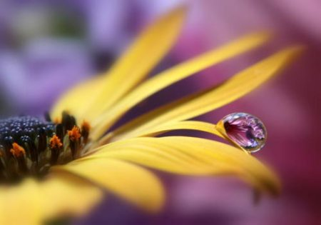 daisy dew by lynette evans