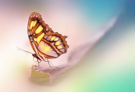 butterfly print by lynette evans