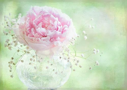 Jacky Parker flowers