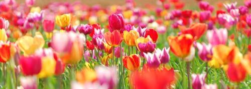 flower print panoramic