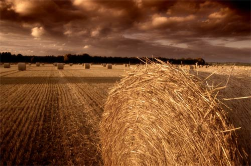 wheat field photo art