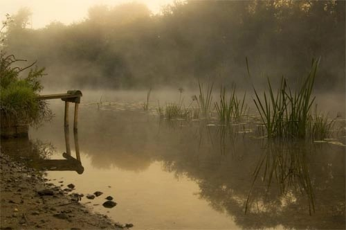 Peaceful Morning River