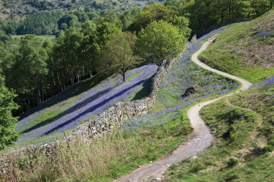 loughrigg-terrace-bluebells2